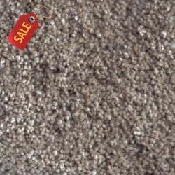 Coconut Grove - Textured Carpet - Textured Carpet